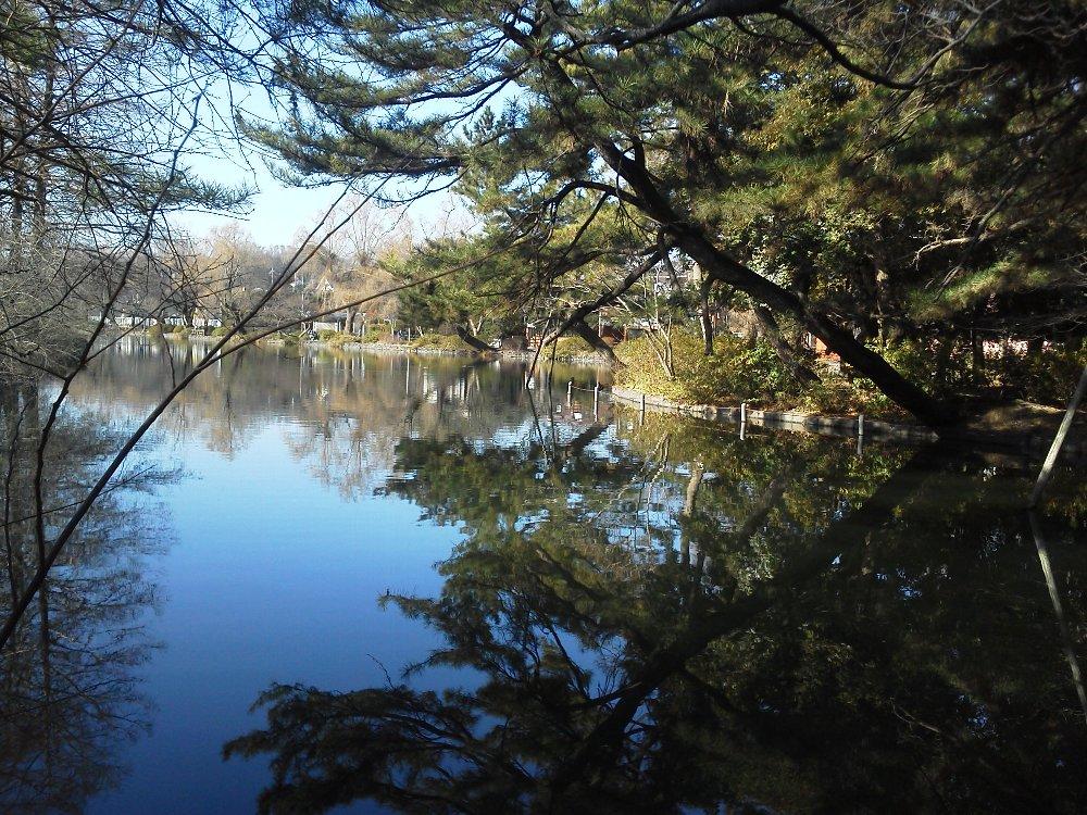 F1001374石神井公園