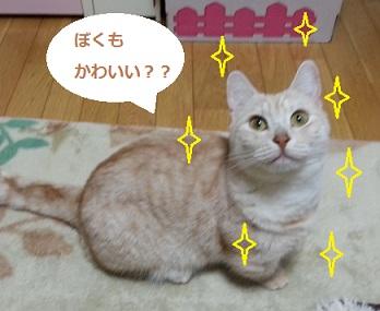 20130130_060200-upload.jpg