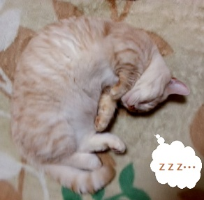 bakusui0215-cut.jpg
