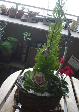 2010.12クリスマス&正月の寄せ植えとプリザのしめ縄飾りp4