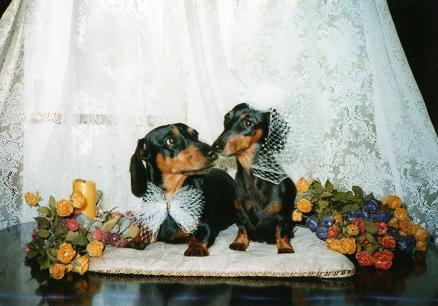 ミット&クレア結婚式(2003年)