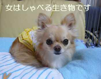 blog2010072702.jpg
