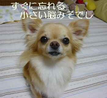 blog2010072802.jpg