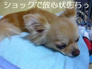 blog2010072804.jpg