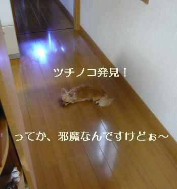 blog2010073101.jpg