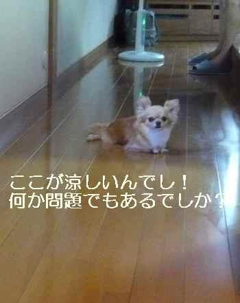 blog2010073102.jpg