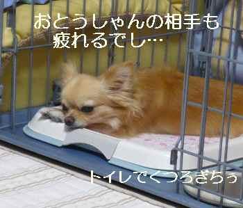 blog2010080103.jpg