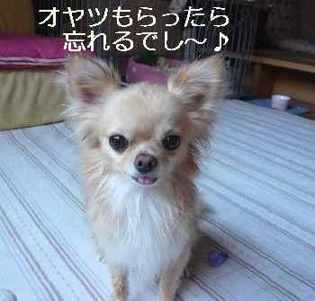blog2010080403.jpg