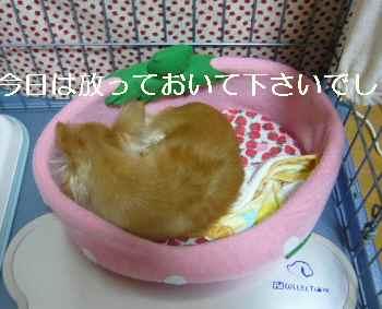 blog2010081603.jpg