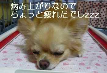blog2010081802.jpg