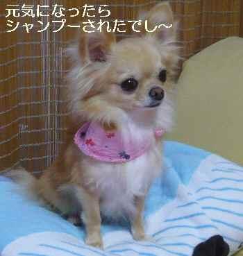 blog2010082204.jpg