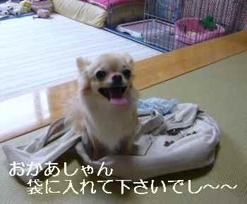 blog2010082301.jpg