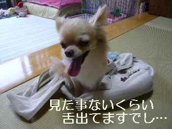 blog2010082302.jpg