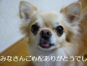 blog2010082401.jpg