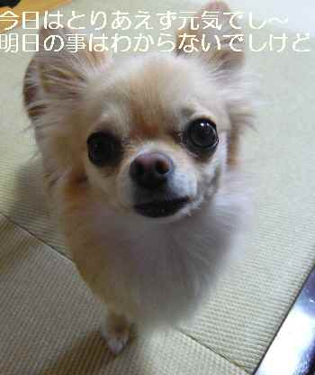 blog2010082404.jpg