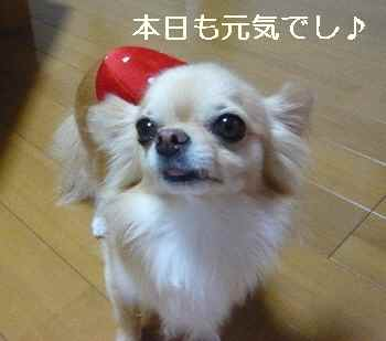 blog2010082502.jpg