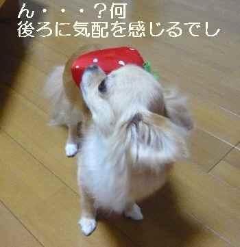 blog2010082503.jpg