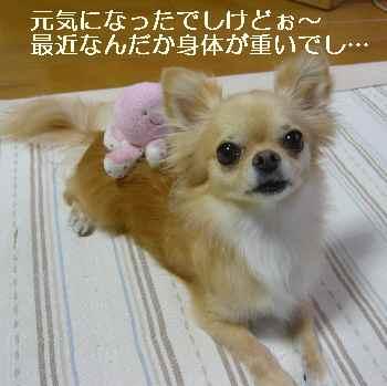 blog2010082604.jpg