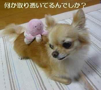 blog2010082605.jpg