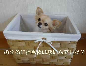 blog2010082901.jpg