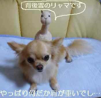 blog2010082902.jpg