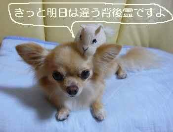 blog2010082903.jpg