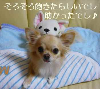 blog2010083002.jpg