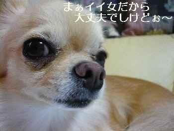 blog2010083103.jpg