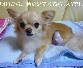 blog2010091302.jpg