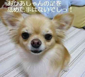 blog2010091503.jpg