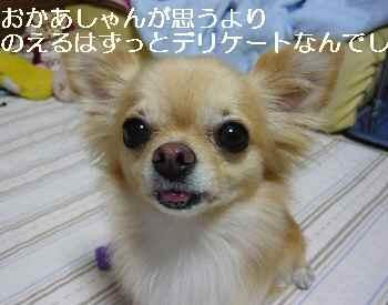 blog2010091702.jpg