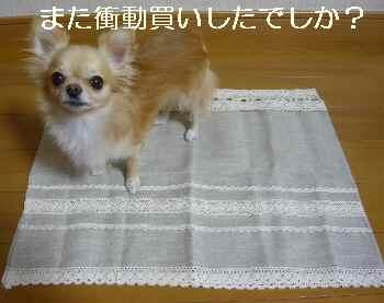 blog2010091801.jpg