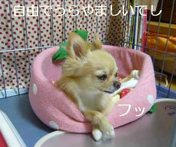 blog2010092102.jpg