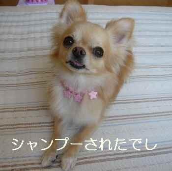 blog2010092501.jpg