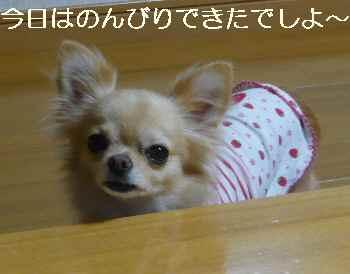 blog2010092702.jpg