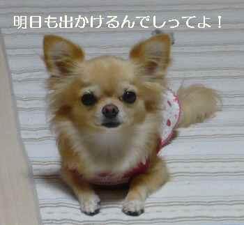 blog2010092803.jpg