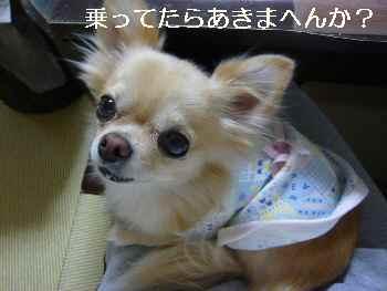 blog2010101802.jpg