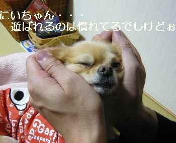 blog2010110501.jpg