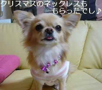 blog2010110604.jpg
