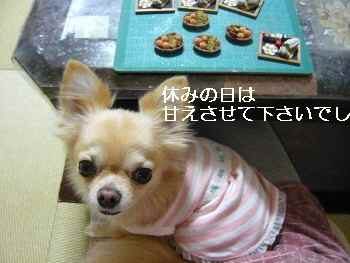blog2010110703.jpg