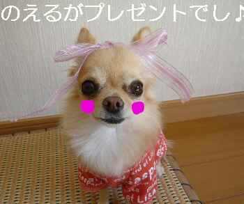 blog2010110901.jpg