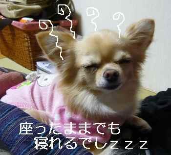 blog2010111004.jpg