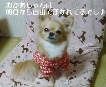 blog2010111802.jpg