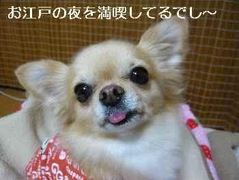 blog2010111902.jpg