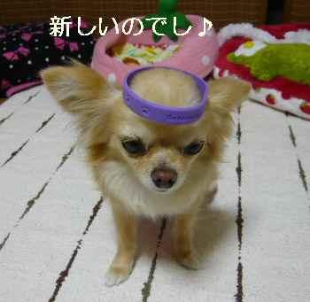 blog2011051702.jpg