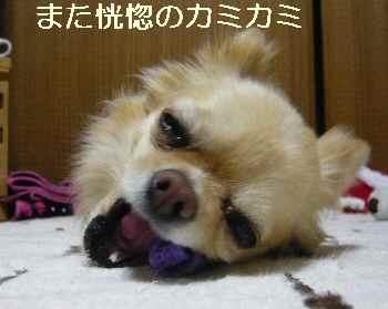 blog2011051902.jpg