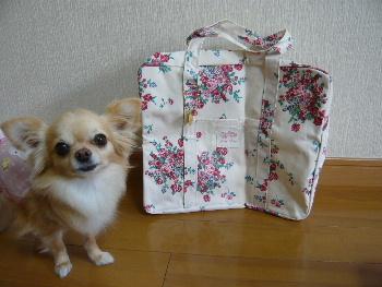 blog2011052002.jpg