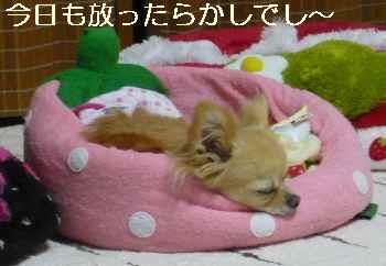blog2011052404.jpg