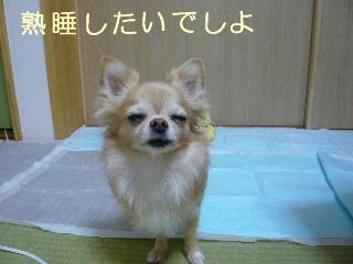 blog2014102603.jpg