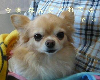 blog2014112901.jpg